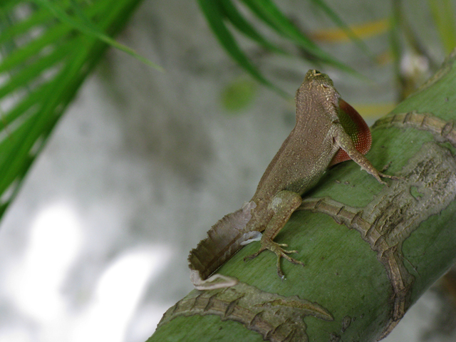 Lizard On Bamboo Cooling Picture