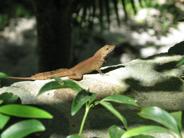 Lizard On Rock Wall Picture