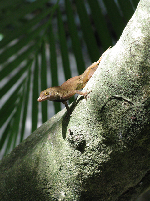 Lizard in Tree 1 Picture