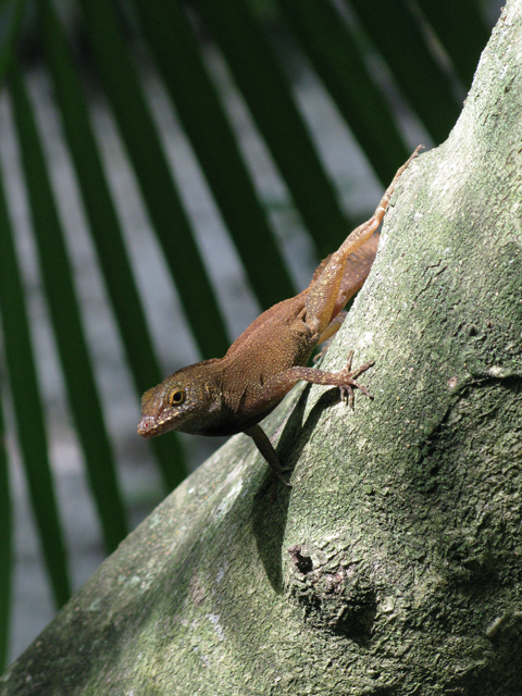 Lizard in Tree 2 Picture